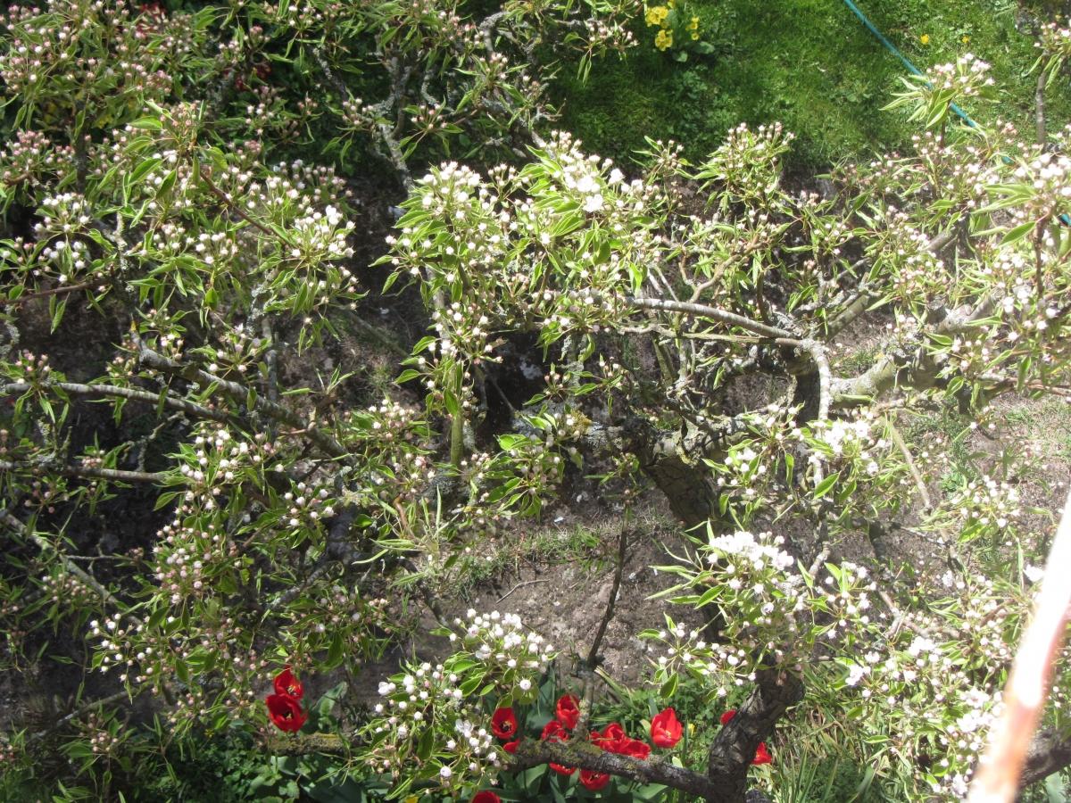 Havtornsblomma