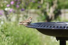 Fågelbadet